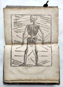 Lorenz Fries Spiegel der Arznei Medizin Anatomie Heilkunde Mittelalter Holzschnitt Skelett